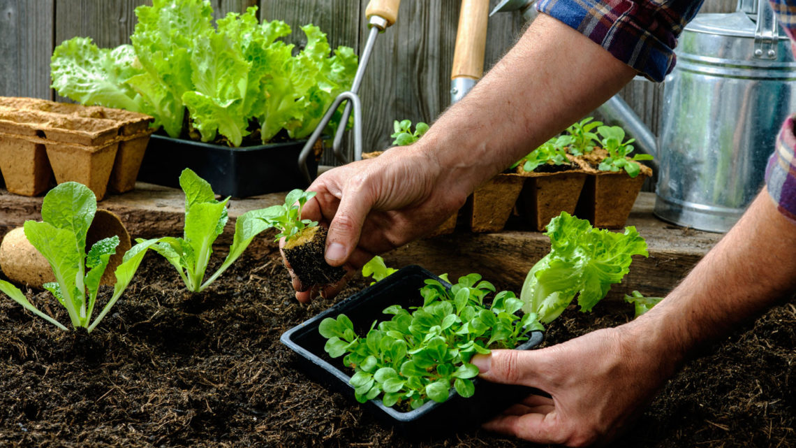 You Need to Prepare Your Garden for Spring Planting