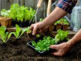 Prepare Your Garden for Spring