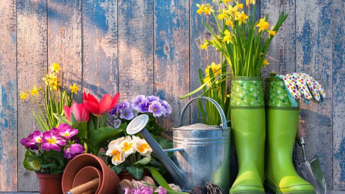 What Do You Need to Know to Prepare Your Garden