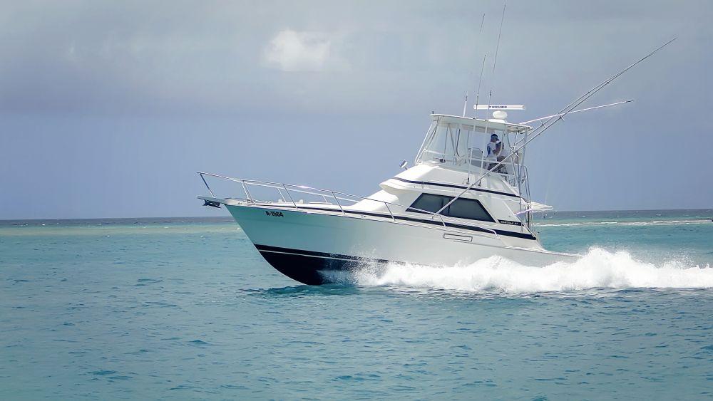Why You Should Go Fishing In Aruba
