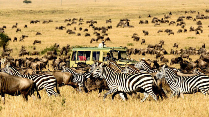 What To Know Before Going On A Safari