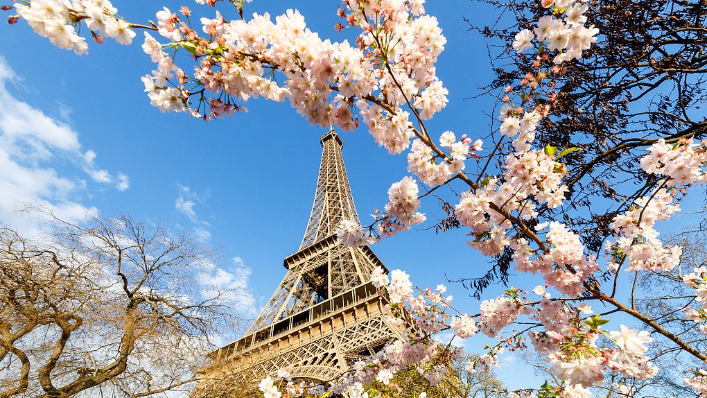 The Most Popular Flowers That Can be Seen in France