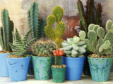 6 Caring Tips and Tricks for Cacti & Succulents