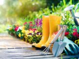 Gardening Tips And Tricks Every Beginner Should Know